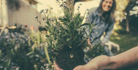 Nasveti vrt vrtnarjenje