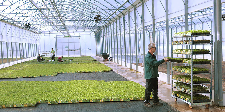 Nakup sadik slovenija dostava na dom
